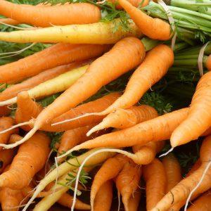 Botte de carottes colorées