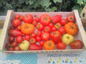 Tomates anciennes mélange